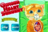 Операция для животных на сердце рыжего котика