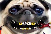 Вылечите острые клыки маленького пса Мопса