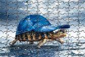 Пазл черепахи