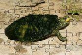 Рожица черепахи пазл