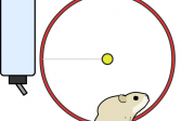 Играть Хомяк онлайн флеш игра для детей
