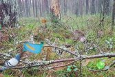 Лесное приключение Бернати Bernati Forest Adventure