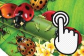 Божья коровка кликер Ladybug Clicker