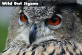 Пазл дикая сова Wild owl Jigsaw