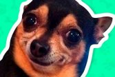 Какой мем собака ты? What meme dog are you ?